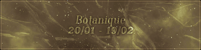 Botanique (20/01 – 19/02)
