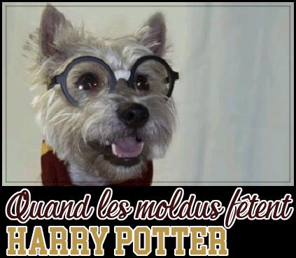 http://gazette.poudlard12.com/public/Charlie/Gazette_139/Quand_les_moldus_fetent_Harry_Potter.png
